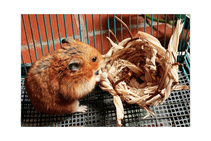 Can You Use Bird Toys For Hamsters