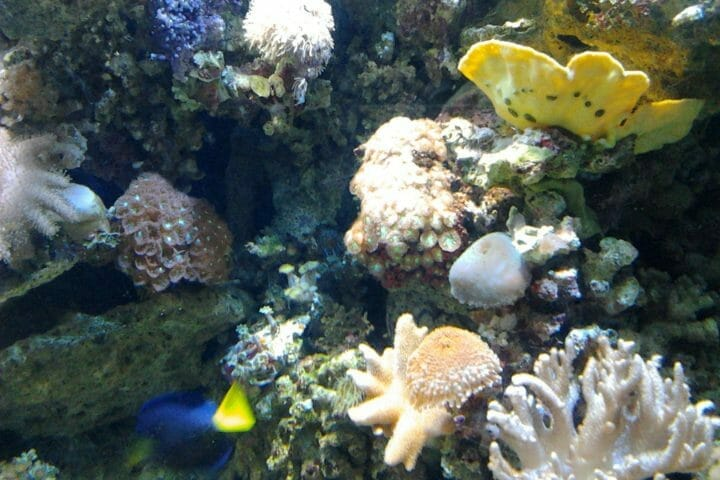 Can You Use Toys In Aquariums