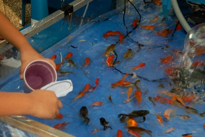 Do Goldfish Play With Toys